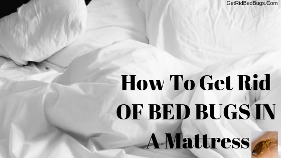 How To Get Rid Of Bed Bugs In A Mattress Easy Steps Get Rid Bed Bugs